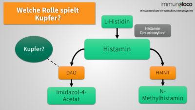 Histaminabbaupfade über DAO und HNMT schmatisch dargestellt